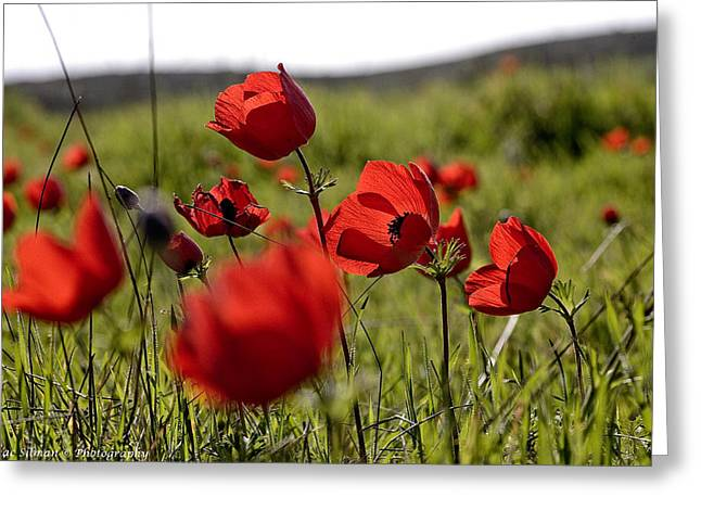 Isaac Silman Greeting Cards - Anemone backlight Greeting Card by Isaac Silman