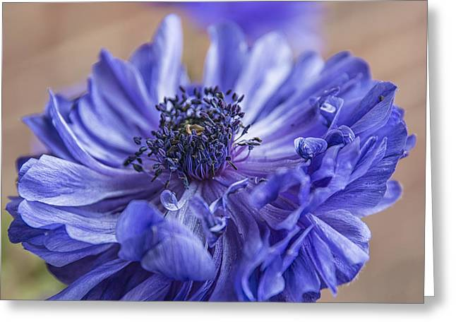 Anenome Greeting Cards - Anemone Blues II Greeting Card by Terry Rowe