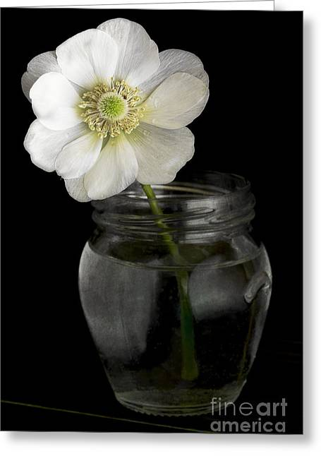 Water Jars Photographs Greeting Cards - Anemone Greeting Card by Elena Nosyreva