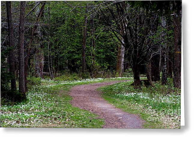 Thimbleweed Greeting Cards - Anemone Path Greeting Card by Torbjorn Swenelius