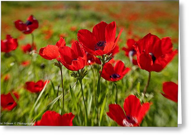 Isaac Silman Greeting Cards - Anemone portrait Greeting Card by Isaac Silman