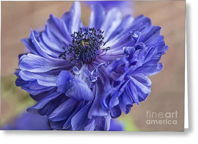 Anenome Greeting Cards - Anemone Blues I Greeting Card by Terry Rowe