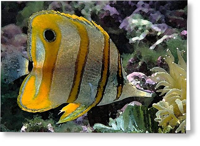 Reef Fish Drawings Greeting Cards - Angel Fish Greeting Card by Cole Black