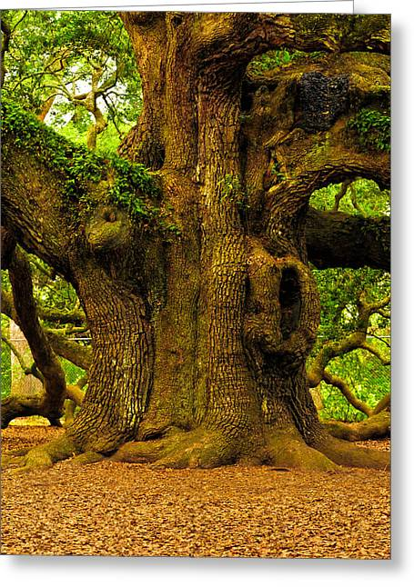 Angel Oak Photographs Greeting Cards - Angel Live Oak Trunk Greeting Card by Louis Dallara