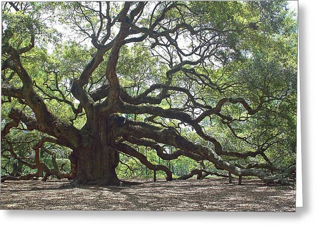 Angel Oak II Greeting Card by Suzanne Gaff