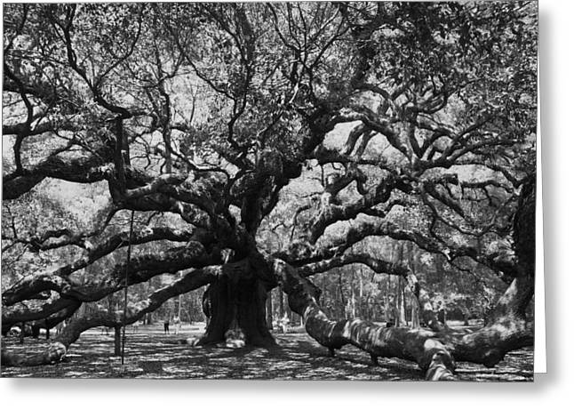 Nature Ceramics Greeting Cards - Angel Oak Greeting Card by Mickey Butler