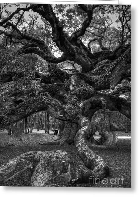 Slaves Greeting Cards - Angel Oak Tree 2 Greeting Card by Kathleen Struckle