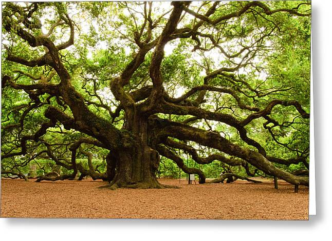 Angel Oak Photographs Greeting Cards - Angel Oak Tree 2009 Greeting Card by Louis Dallara