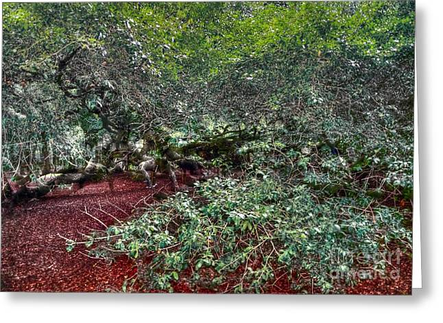 Angel Oak Photographs Greeting Cards - Angel Oak Tree 3 Greeting Card by Kathleen Struckle