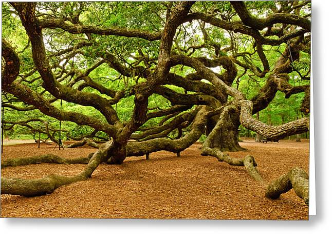 Shamanism Greeting Cards - Angel Oak Tree Branches Greeting Card by Louis Dallara