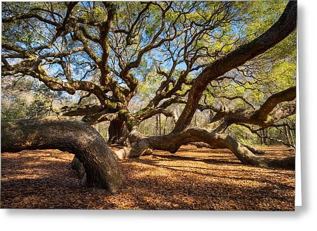Angel Oak Tree Charleston Sc Greeting Card by Dave Allen