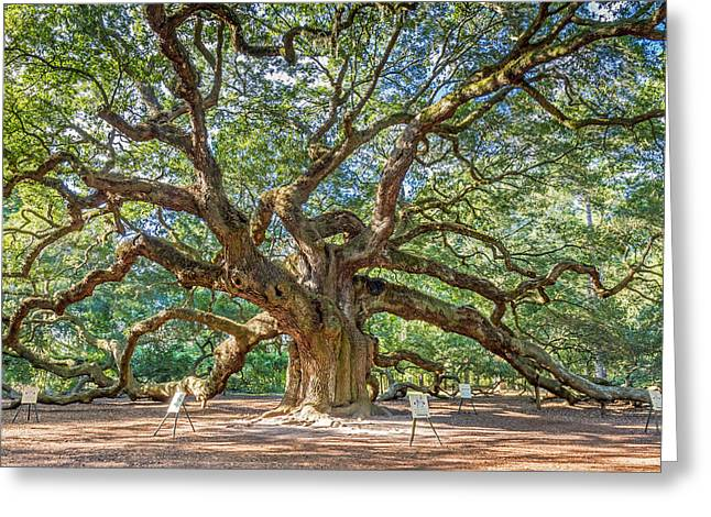 Old Growth Greeting Cards - Angel Oak Tree in Charleston SC Greeting Card by Pierre Leclerc Photography