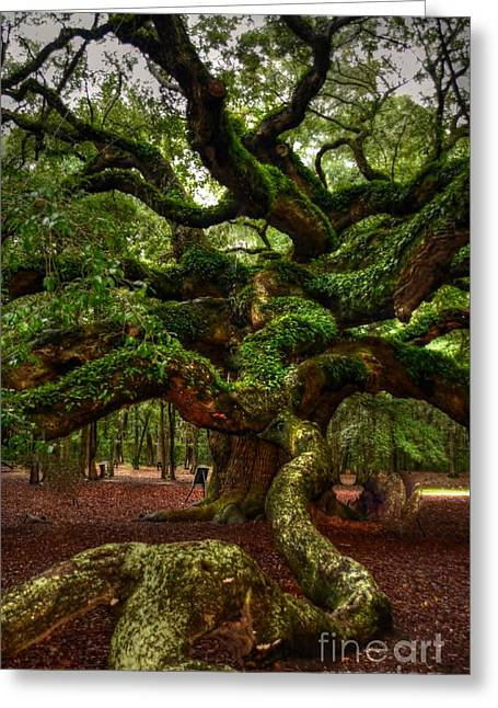 Struckle Greeting Cards - Angel Oak Tree Greeting Card by Kathleen Struckle