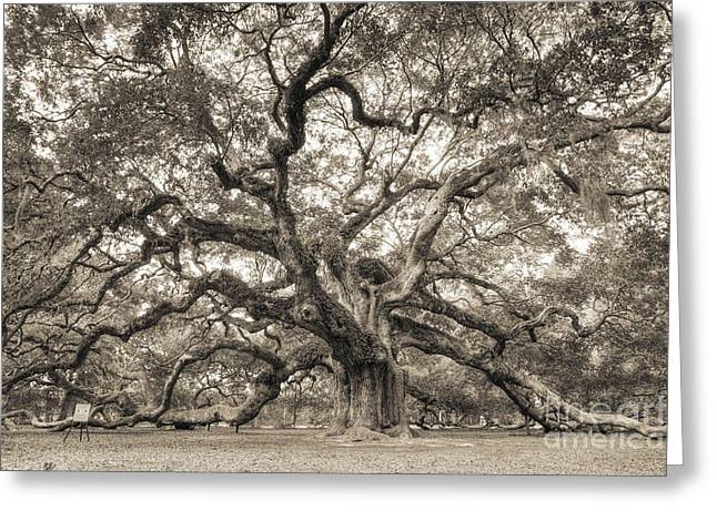 Tall Tree Greeting Cards - Angel Oak Tree of Life Sepia Greeting Card by Dustin K Ryan
