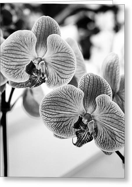 Featured Art Greeting Cards - ANGEL Orchids Greeting Card by William Dey