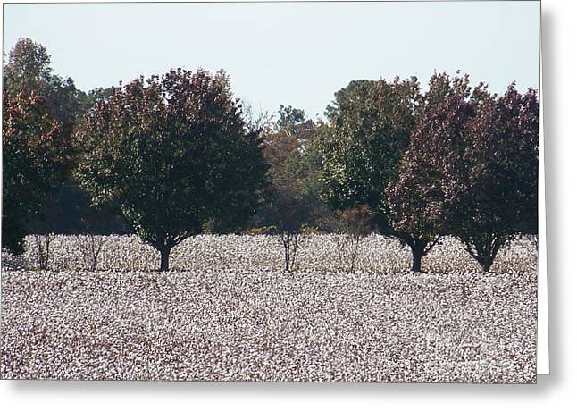 Kevin Croitz Greeting Cards - Angelic Cotton Fields Greeting Card by Kevin Croitz