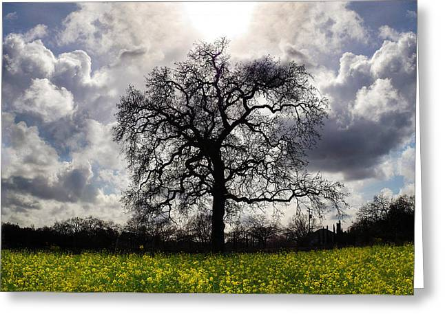 Sonoma County Greeting Cards - Angels Song Greeting Card by Stan Angel