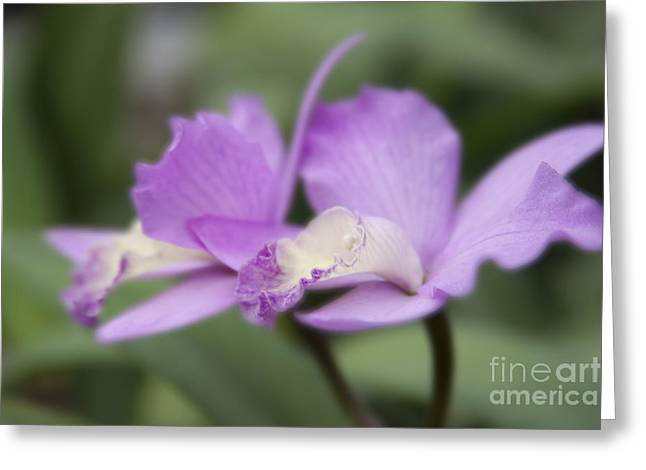 Angels Treasure Hawaii Orchid Greeting Card by Sharon Mau