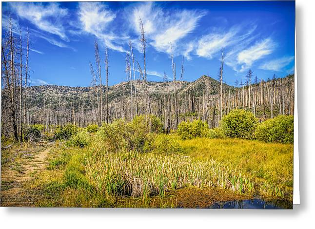 Angora Lakes Greeting Cards - Angora Creek Restoration Greeting Card by LeeAnn McLaneGoetz McLaneGoetzStudioLLCcom