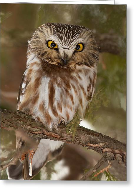 Saw Greeting Cards - Angry bird Greeting Card by Mircea Costina Photography