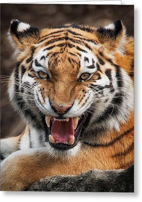 Pittsburgh Zoo Greeting Cards - Angry cat Greeting Card by Emmanuel Panagiotakis