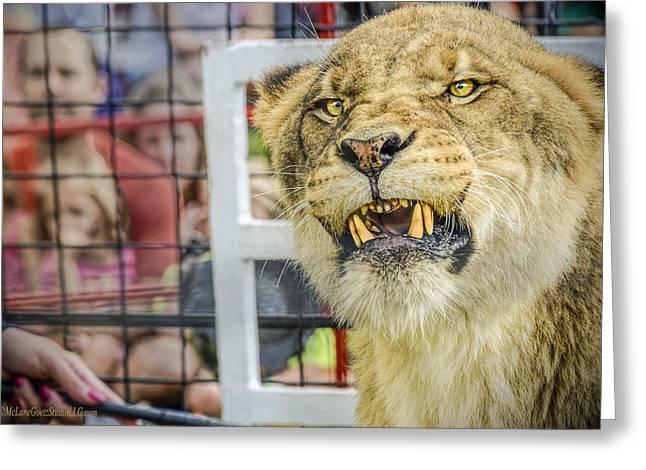Lions Greeting Cards - Angry Circus Lion Greeting Card by LeeAnn McLaneGoetz McLaneGoetzStudioLLCcom