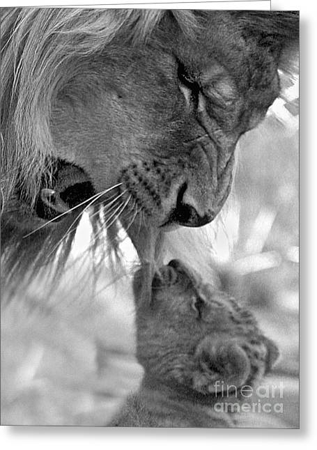 Lions Pyrography Greeting Cards - Angry Dad Greeting Card by Michael Burlak