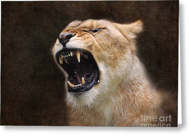 Lioness Greeting Cards - Angry Lioness Greeting Card by Jai Johnson