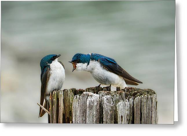 Angry Swallow Greeting Card by Jai Johnson