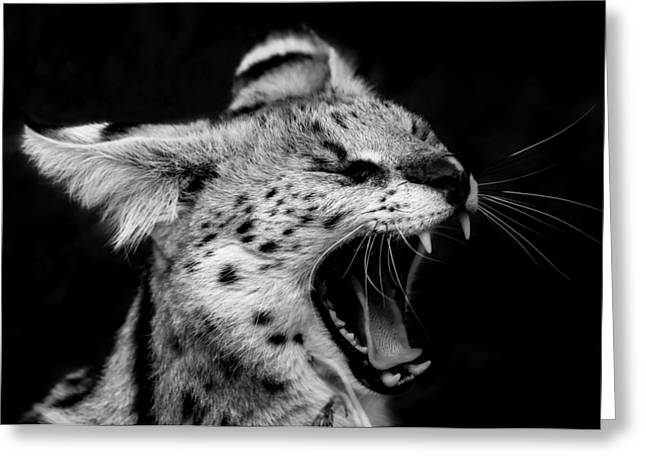 White Serval Greeting Cards - Angry Wild Serval Cat Greeting Card by Kathy Kay
