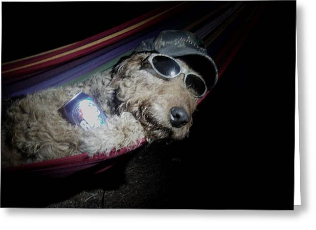 Sunglasses Pyrography Greeting Cards - Angus The Airedale  Greeting Card by Janet  Lipp