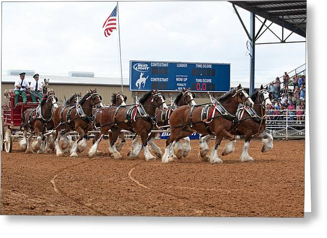 Dog Trots Photographs Greeting Cards - Anheuser Busch Clydesdales Pulling a Beer Wagon USA Rodeo Greeting Card by Sally Rockefeller