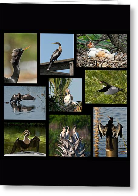 Anhinga Collage Greeting Card by Dawn Currie