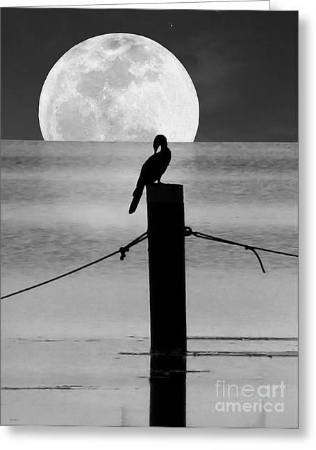 Surreal Moonrise Greeting Cards - Anhinga Moon Greeting Card by Deborah Smith