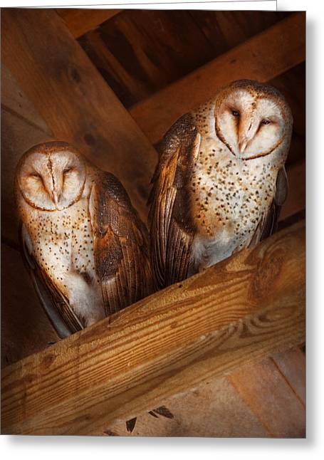 Hdr Look Greeting Cards - Animal - Bird - A couple of barn owls Greeting Card by Mike Savad