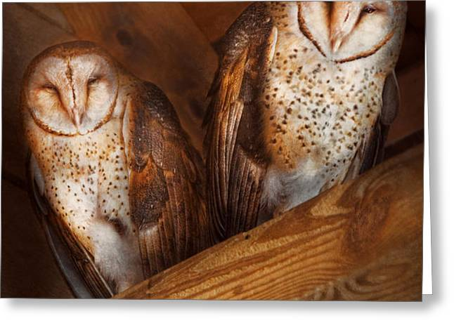 Animal - Bird - A couple of barn owls Greeting Card by Mike Savad