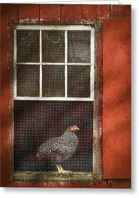Plymouth Rock Greeting Cards - Animal - Bird - Chicken in a window Greeting Card by Mike Savad