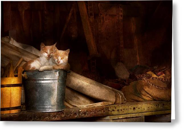 Farm Cat Greeting Cards - Animal - Cat - Bucket of fun  Greeting Card by Mike Savad