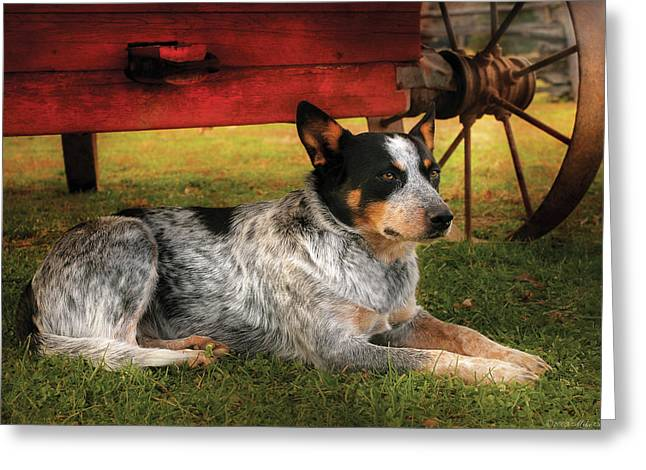 Loyal Greeting Cards - Animal - Dog - Always Faithful Greeting Card by Mike Savad
