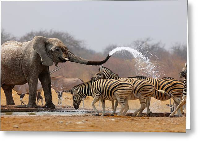 Zebras Greeting Cards - Animal humour Greeting Card by Johan Swanepoel