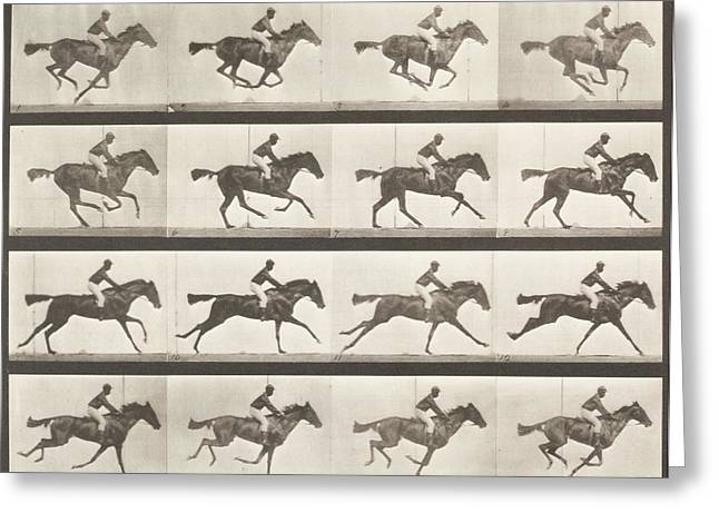 Slide Photographs Greeting Cards - ANIMAL LOCOMOTION - Horse Greeting Card by Celestial Images