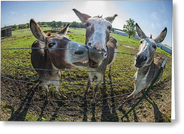 Chatty Greeting Cards - Animal Personalities Smiling Chatty Donkeys Tell Gossip Greeting Card by Jani Bryson