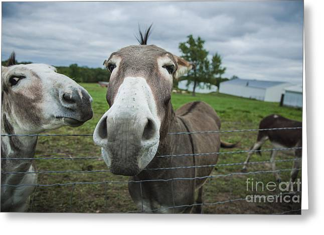 Ashamed Greeting Cards - Animal Personalities Two Embarrassed Ashamed Donkeys Greeting Card by Jani Bryson