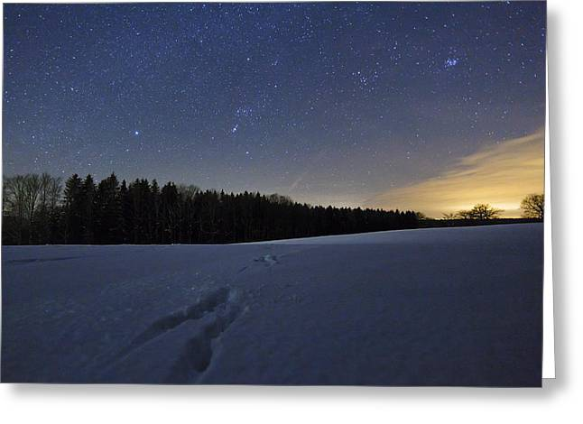 Snow And Night Sky Greeting Cards - Animal Tracks In Snow Bavaria Germany Greeting Card by Konrad Wothe