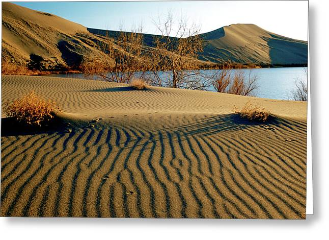 Ripples In The Sand Greeting Cards - Animal Tracks in the Sand Greeting Card by Ed  Riche