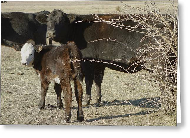 Cow Images Greeting Cards - animals cows COW WITH CALF photograph  Greeting Card by Ann Powell