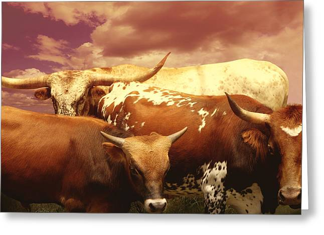 Three Cows Greeting Cards - animals - cows- Longhorns La Familia  Greeting Card by Ann Powell