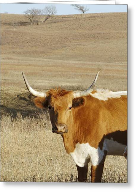 Cow Images Photographs Greeting Cards - animals cows photography LONGHORN IN WINTER  Greeting Card by Ann Powell