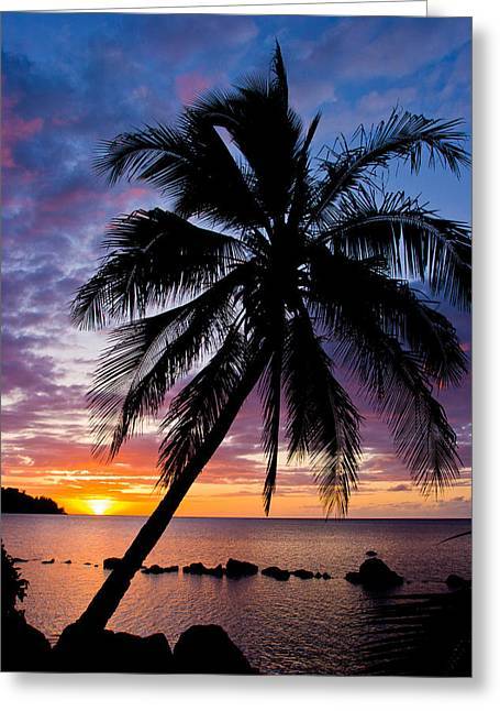Hawai Greeting Cards - Anini Palm Greeting Card by Adam Pender