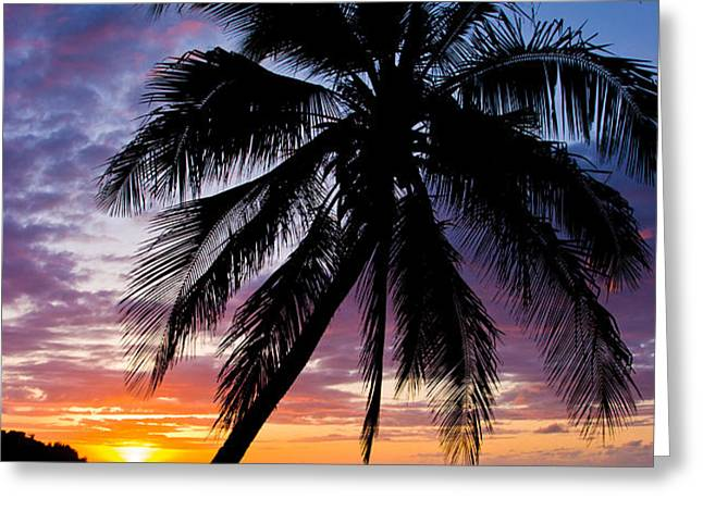 Anini Palm Greeting Card by Adam Pender